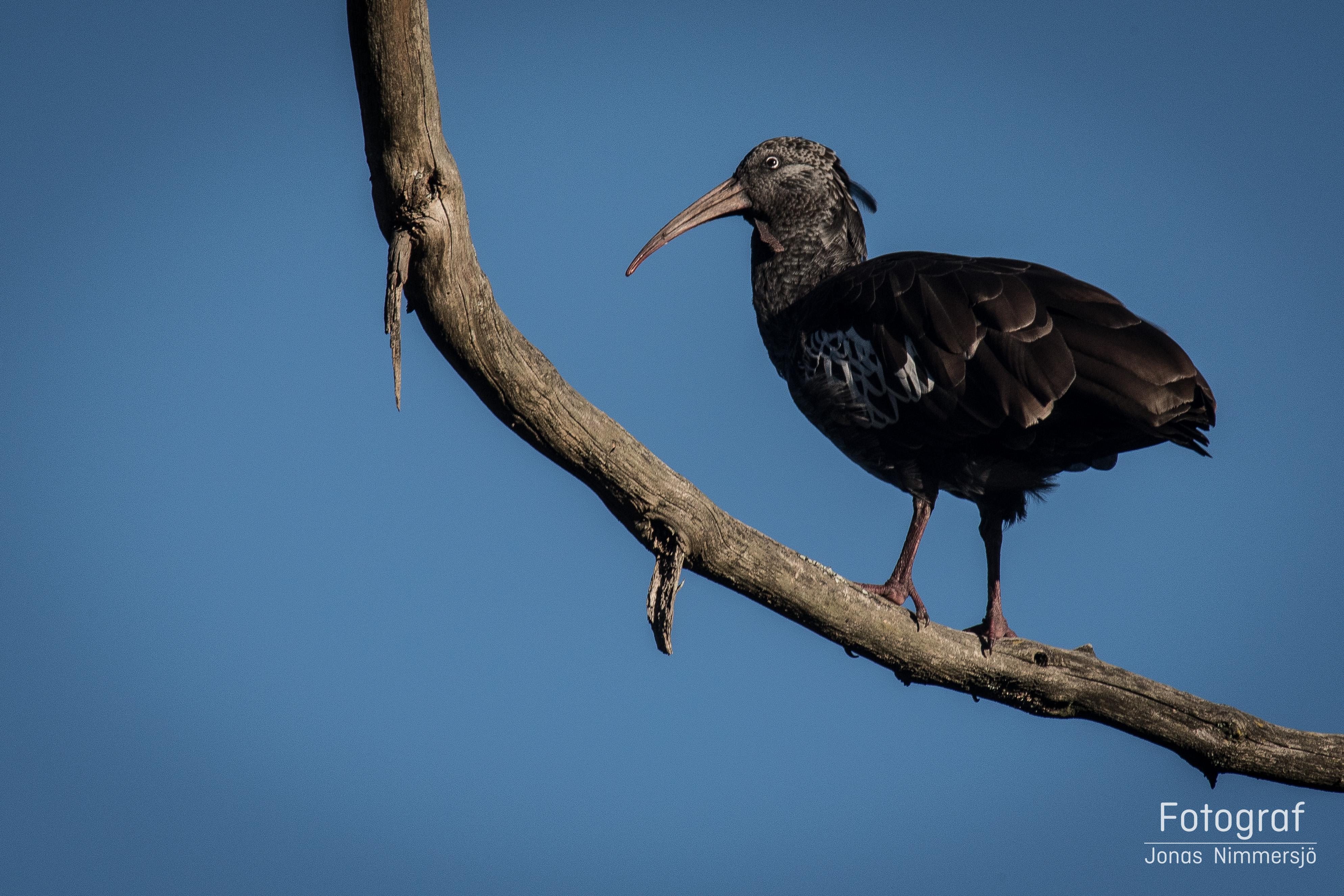 Fågelsafari i Etiopien